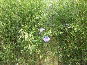 Bamboo +Clematis