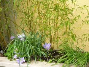 clematis + bamboo